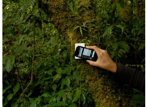 nfc tree rain forest